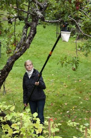 Universal Cutter Fiskars, per potare gli alberi senza l'uso della scala
