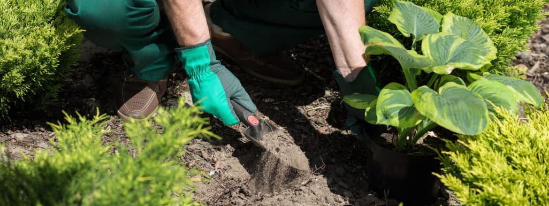Da Fito alcune soluzioni per preparare le piante di casa all'arrivo dell'autunno