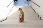 Il nuovo smarphone  XperiaTM X Sony usato dal noto fotografo Rafael Mantesso per originali foto di cani in giro per Barcellona