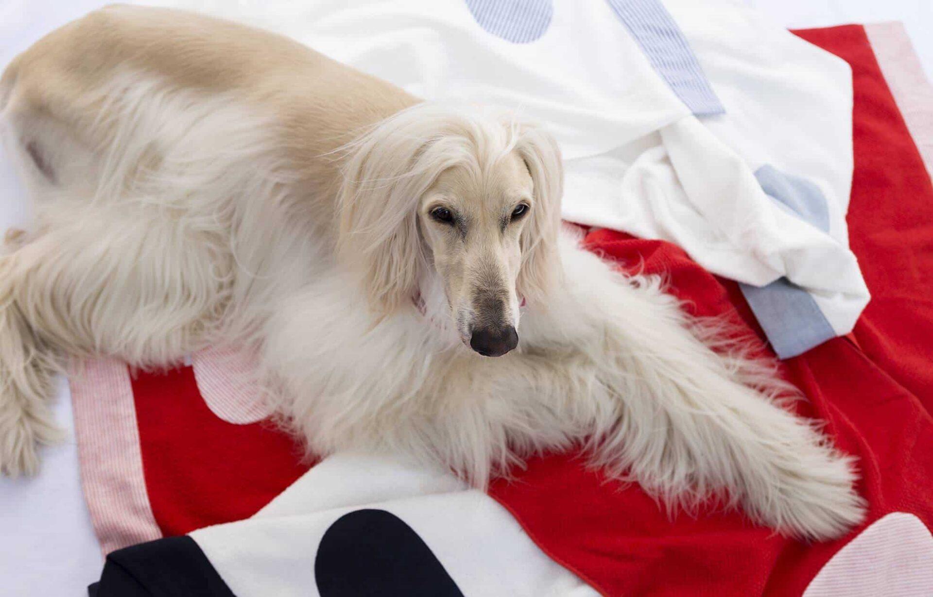 Temellini Milano Dog-à-Porter, la linea di abbigliamento e accessori pensata per il tuo più fedele amico