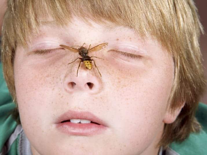 Zanzarella DOPO PUNTURA senza ammoniaca,