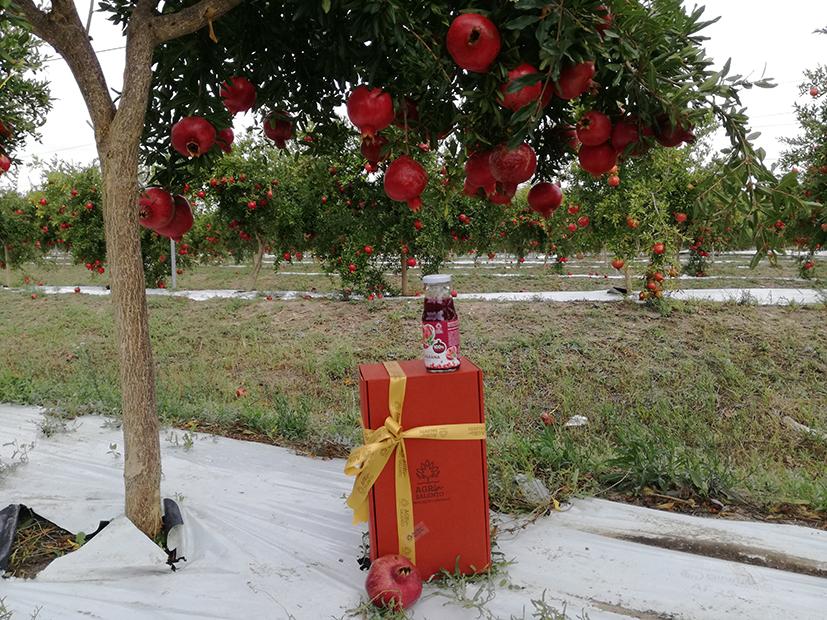I sapori del Salento nei regali di Natale di Agrinsalento